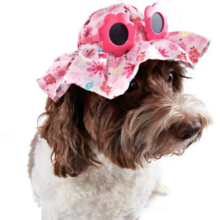 Dog Hat - Flowers